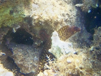 moray-eel-a.jpg