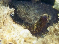 moray-eel-c.jpg