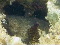 moray-eel-d.jpg