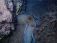 octopus-b.jpg