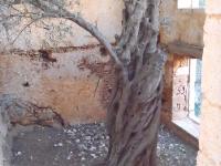 katholico-monastery