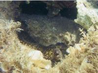 moray-eel-b.jpg
